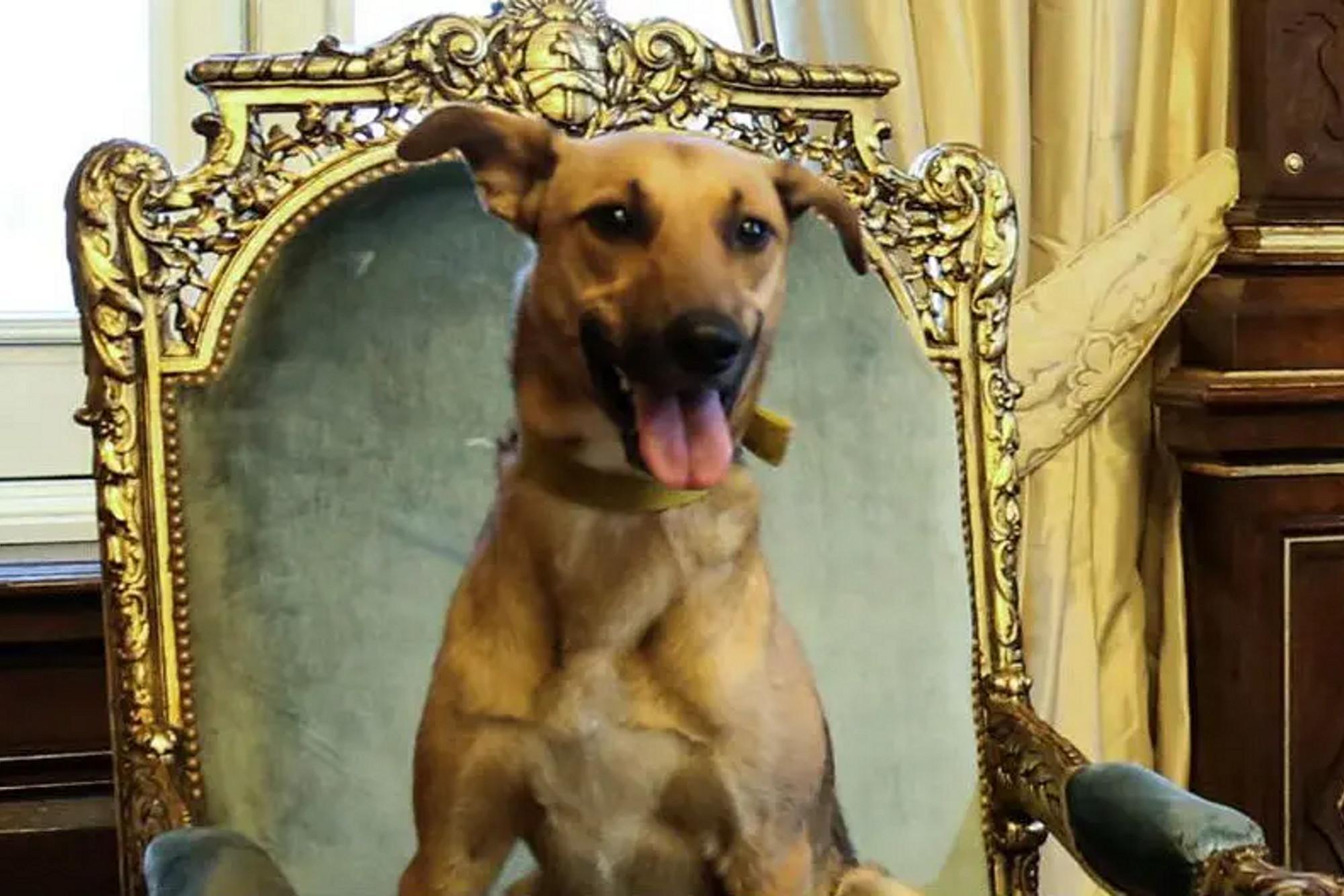 Perros políticos: Balcarce, la cábala de la campaña del Pro, pasó del sillón presidencial al anonimato