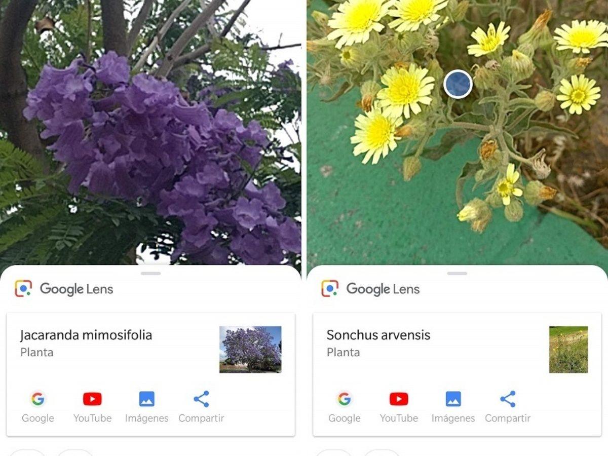 Google Lens: cómo es la nueva App con inteligencia artificial y qué usos le podés dar en el día a día