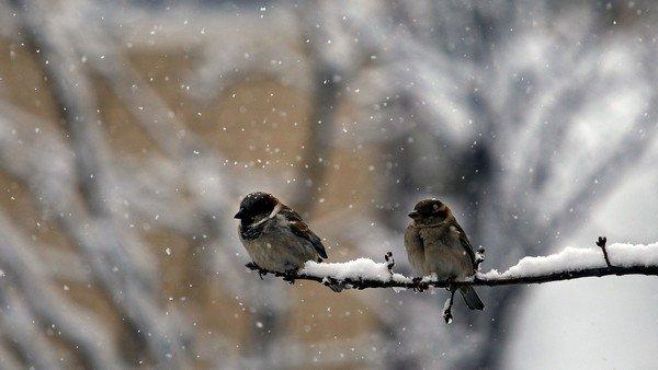 Alerta en EE.UU. y Canadá: la cantidad de aves se redujo casi el 30 por ciento durante los últimos 50 años