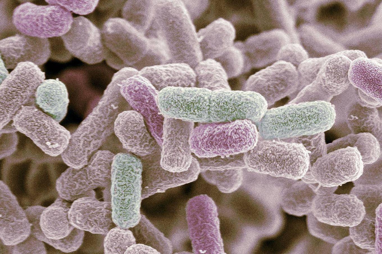 En el futuro podrías tener una Internet de las Cosas corporal hecha con bacterias
