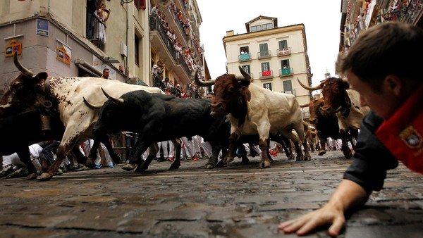cual-es-la-diferencia-entre-un-toro-y-un-buey